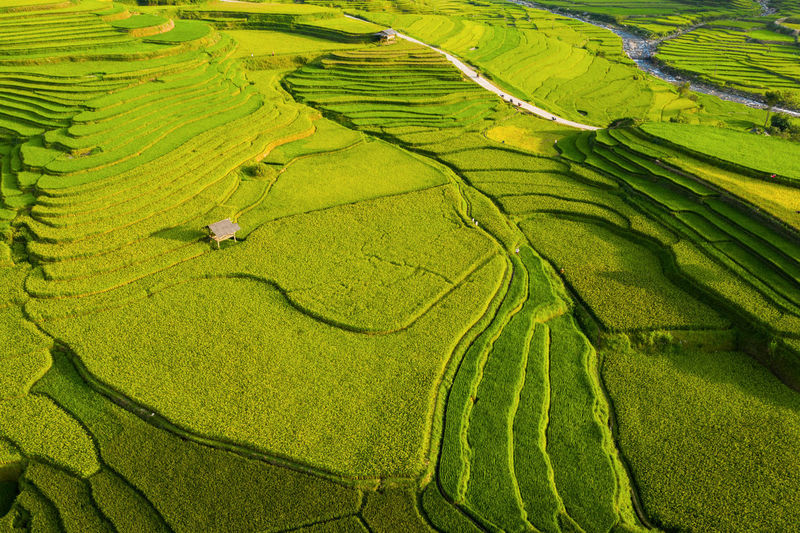 Full frame shot of terraced field