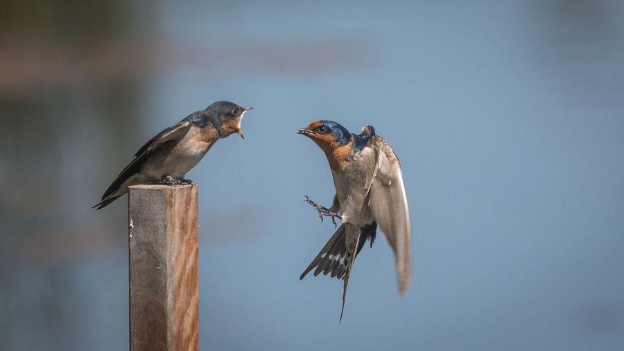 Mother feeding