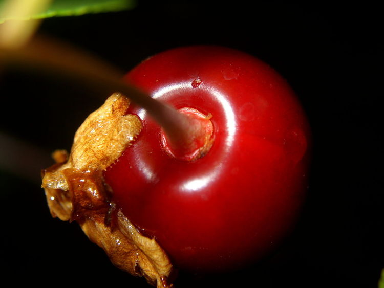 Sour Cherry Black Background Close-up Day Food Food And Drink Freshness Healthy Eating No People Red