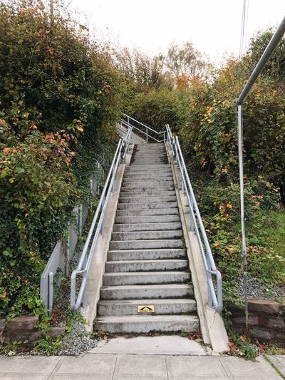 Tree The Way Forward Outdoors Railing Steps Day Nature No People Steps And Staircases Staircase My Running View Stairs