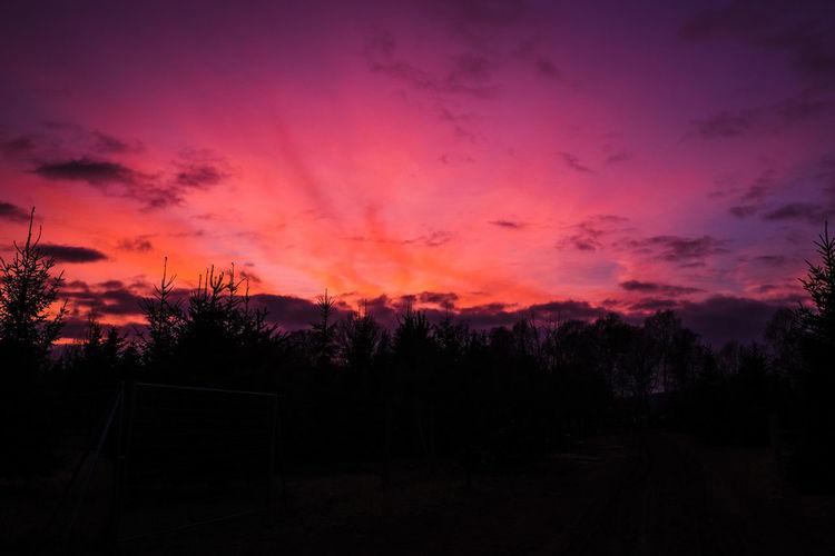 Tree Dramatic Sky Silhouette Cloud - Sky Sky Nature No People Landscape Night