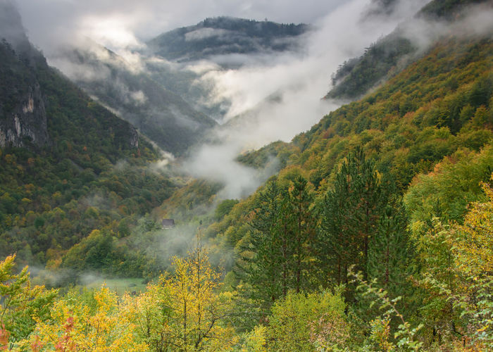 Montenegro Tara Canyon Beauty In Nature Cloud - Sky Day Fog Green Color Idyllic Landscape Mountain Mountain Range Nature No People Outdoors Scenics Sky Tree Waterfall