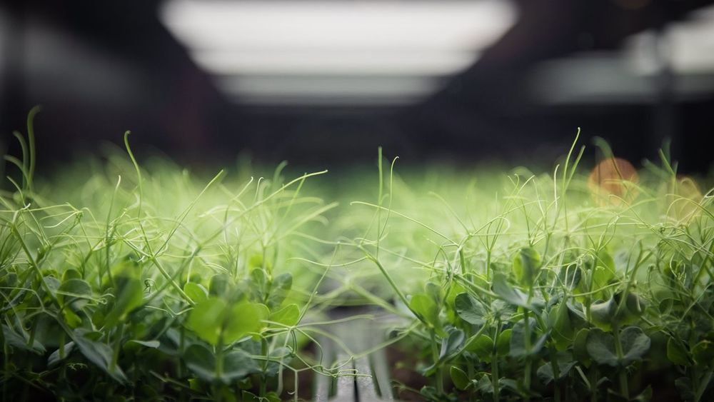 Green plants Depth Bokeh Dof depth of field Growth Plant Green Color Nature Beauty In Nature No People Close-up Day Focus On Foreground Field Selective Focus Land Water Tranquility Agriculture Plant Part Rural Scene Outdoors Leaf Freshness