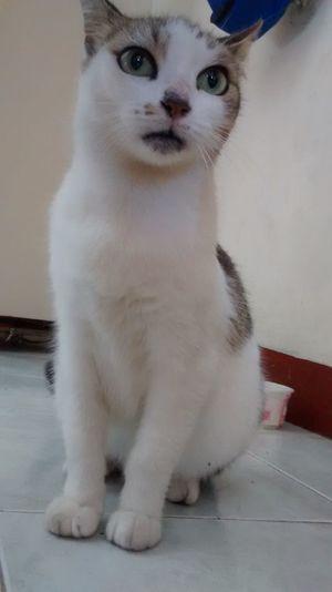 :3 Beautiful Cat