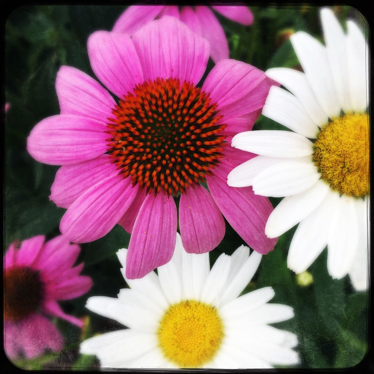 flower, petal, fragility, beauty in nature, flower head, freshness, nature, pollen, blooming, growth, no people, plant, close-up, yellow, day, outdoors, osteospermum, eastern purple coneflower