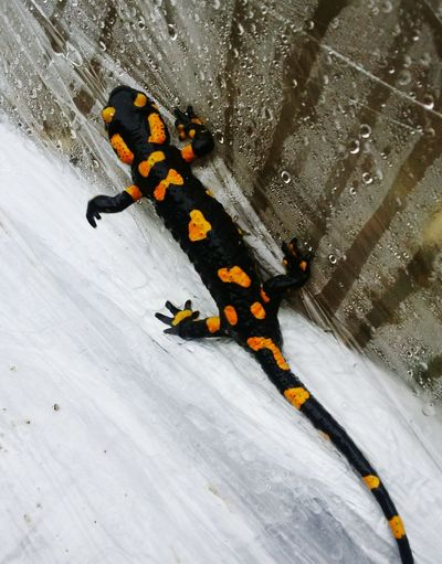 High Angle View Snow Animal Themes Animals In The Wild Outdoors Nature Day No People Cold Temperature Close-up Chrixxo Check This Out Rainy Dax Rain Watertrop