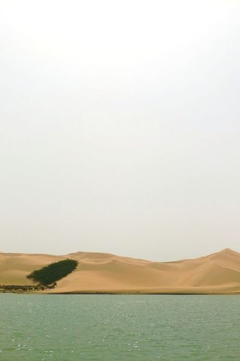 EyeEm Best Shots EyeEmNewHere EyeEm Selects Water Sea Salt - Mineral Beach Flamingo Sand Sky
