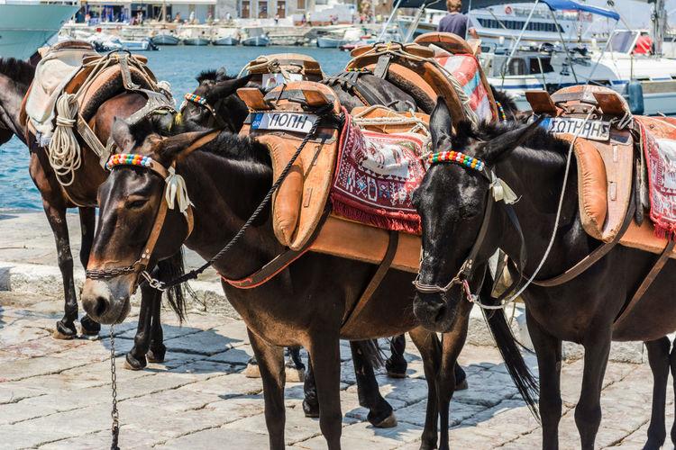 Horses in a horse cart