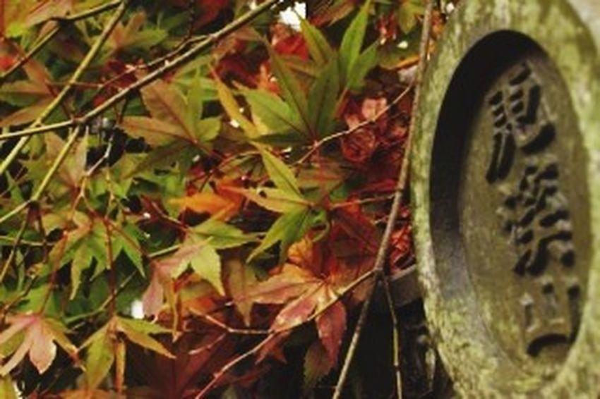 濡れて艶。 紅葉 公園 Autumn🍁🍁🍁 落ち葉