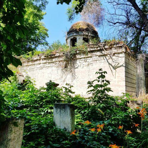 No People Nature Moldova Chisinau Moldova Jewish Cemetery Jewish Heritage Sinagoga Jewish Moldova