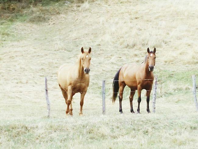 Cavalli Horses Verde Love ♥ Amore Mio ❤ Felicità Marrone Brown Due Coppiaperfetta felici nella prateria...