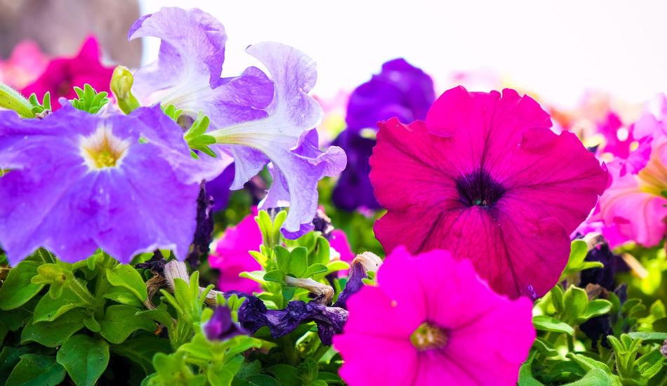 http://instagram.com/PicFunIL Buy Donate Drops Flower Fujifilm FUJIFILM X-T1 Google Haifa Israel Jewish Macro Nature Prints Sping Sprinh ^_^ Street Summer Sun