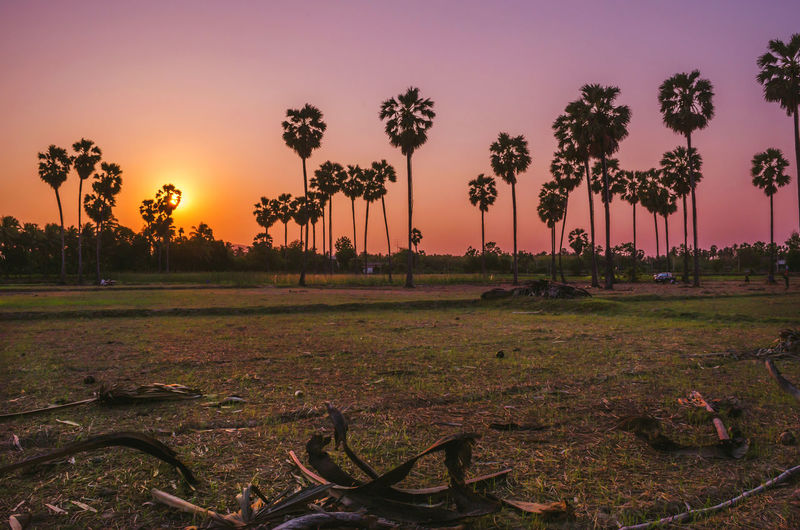 Shadow of the palm tree at sunset. EyeEm Nature Lover EyeEm Gallery Silhouette Sugar Palm Tree Sunset_collection Beauty In Nature Clourful Sky Day Field Grass Landscape Nature No People Outdoors Palm Tree Scenics Sky Sunrise Sunset Sunsets Toddy Palm Tree