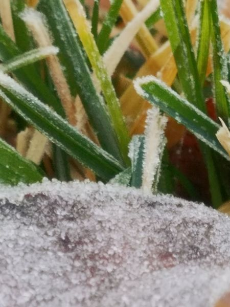 Frost in the morning Plant Nature Close-up Selective Focus Green Color No People Outdoors Beauty In Nature Freshness