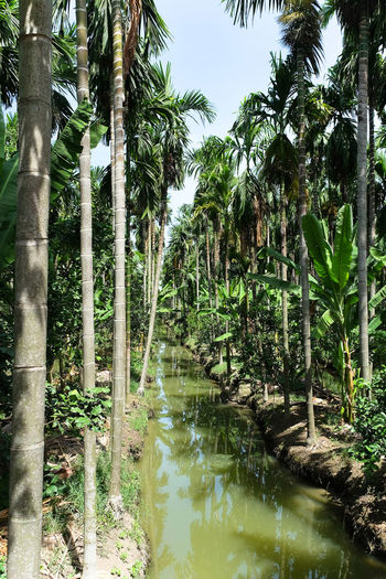 Scenic view of palm trees in forest