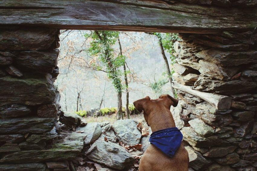 Looking To The Other Side Fos NoEditNoFilter Montagne Pyrenees Ilovemydog Bambou EyeEm Best Shots Fos, France
