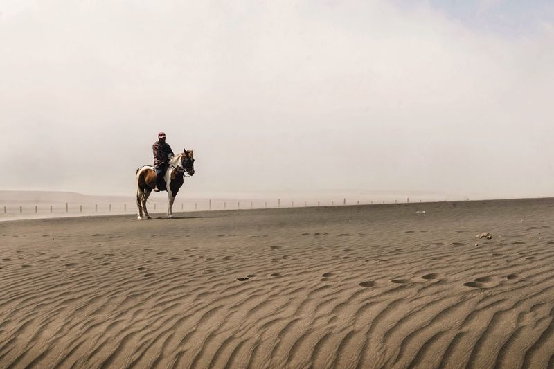 Horseman Sand Patterns Bromo Bromo Mountain Sand Horseman Horse EyeEm Selects Land Domestic Animals Mammal Domestic Sand Riding Animal Wildlife Working Animal Nature Beach Men People Pets Ride Horse Livestock Sky Real People Outdoors