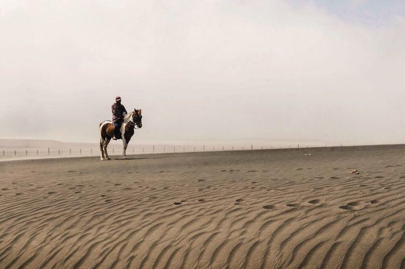 People riding horse on desert