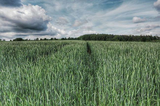 Diminishing Perspective Great Outdoors - 2016 EyeEm Awards Fieldscape Germany Taunus Nature