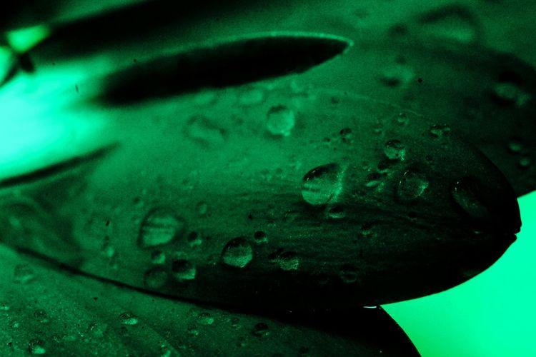 Gocce Gocce Di Pioggia Rain Drops