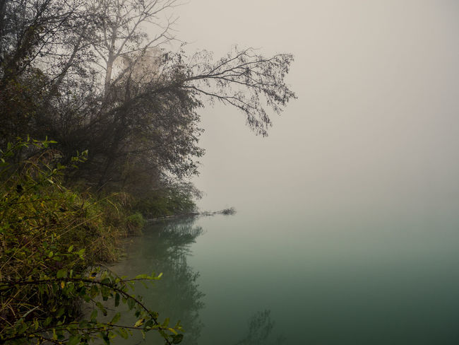 "The river""inn"" in the fog Tree Water Nature Outdoors No People Day Beauty In Nature Forest Sky Freshness Scenics Landscape Multi Colored Fog Mist Low Angle View Autumn Bavaria Beauty In Nature Growth Tree Misty Landscape Misty Morning River Riverside"