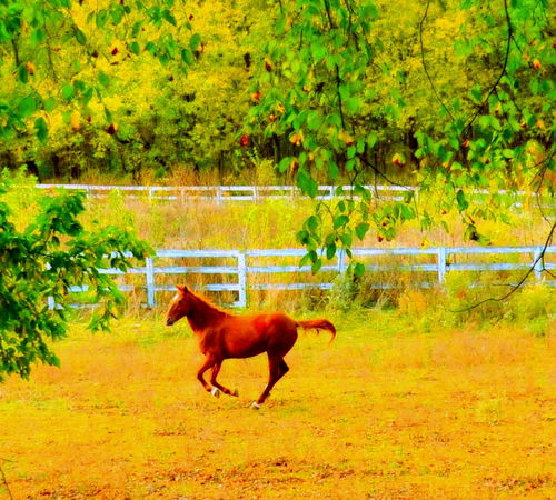 Beauty In Nature Day Gallop Horse Motion Nature Pasture Running Horse Need For Speed