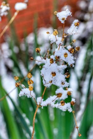 Nature Focus On Foreground No People Growth Outdoors Beauty In Nature Day Close-up Snow EyeEm Nature Lover Nature At Your Doorstep Cold Temperature Snow ❄ Dried Seeds Seeds Frosted Nature