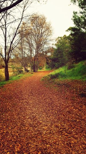 River Nature Hiking Autumn