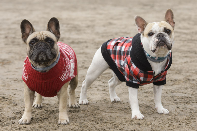 Portrait of two dogs on land