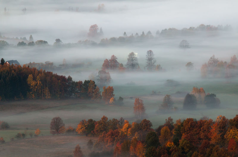 Trees On Landscape During Foggy Weather
