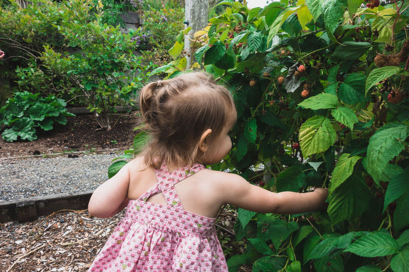 Rear View Of Girl Touching Plant