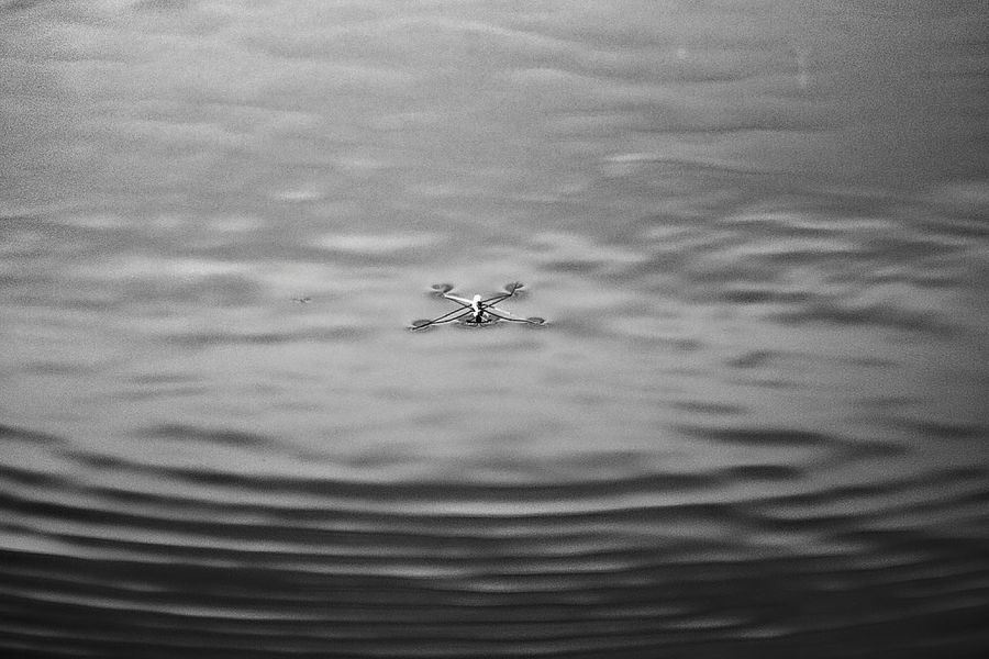 Shades Of Grey Black And White Insect Boatsmen Water Ripples Shades Nature EyeEm Nature Lover Pattern