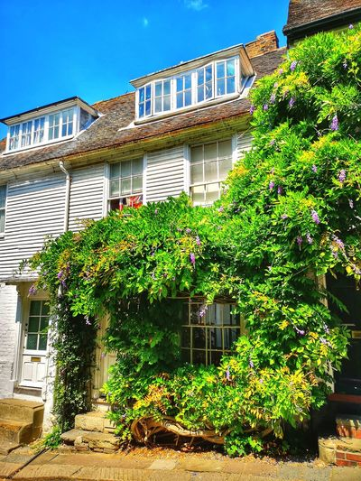 Wisteria house Wisteria Wisteria Flower Wisteria In Full Bloom RYE Rye Streets Plant On A Wall Romantic Romantic Place Romanticism Romantic Places Architecture Sky Building Exterior Built Structure Blooming Plant Life