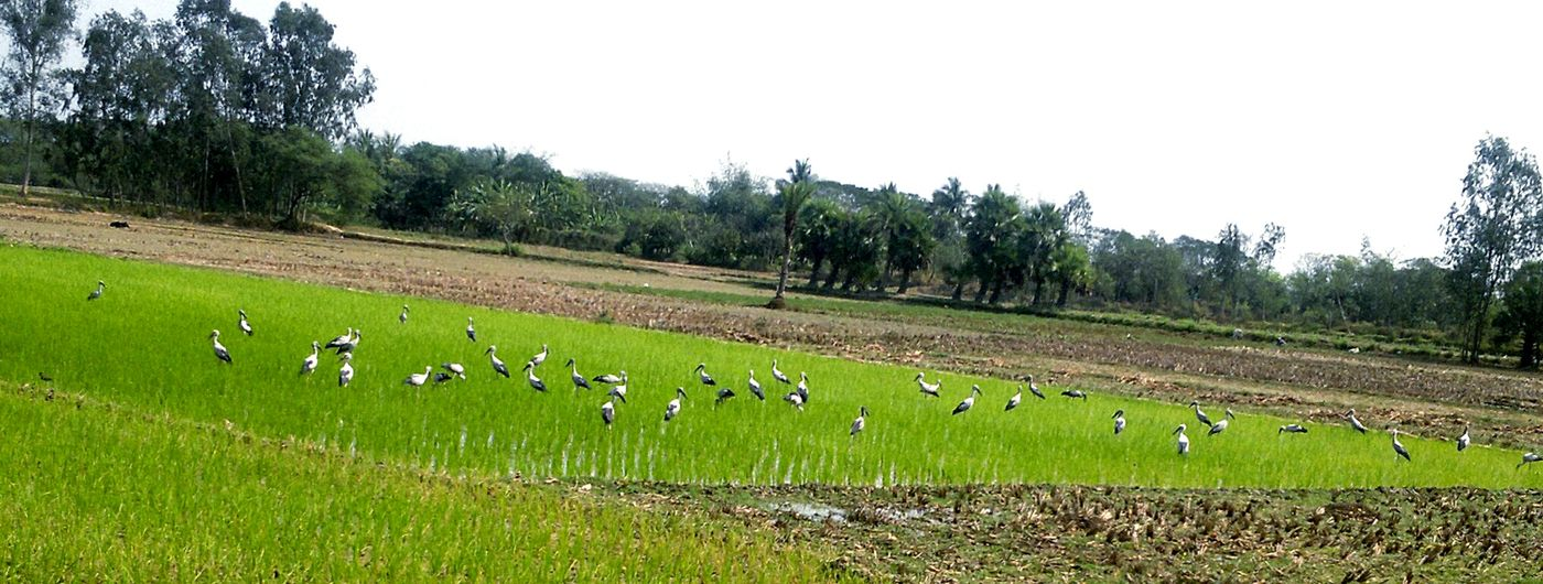 Hello World Village Scape. EyeEm Best Shots - Landscape Eyeem Nature Lover. Open Edit. Taking Photos. Beautiful Birds .