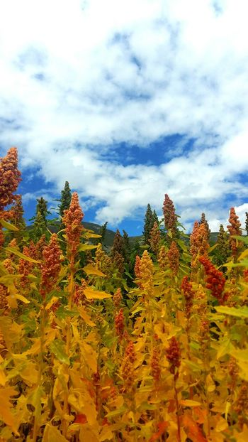 Tibet Lhasa 201708 Nature Road Blue Sky Side View Flowers Colorful Warm Couldy Beautiful Beauty In Nature Tree Autumn Leaf Change Mountain Sky Plant Cloud - Sky Landscape