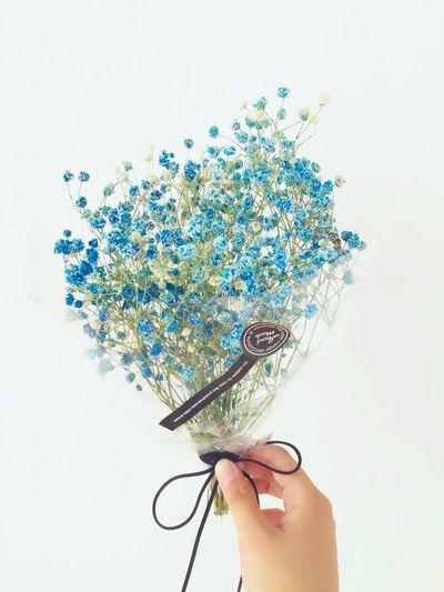Babysbreath Babysbreathflower Babysbreath Flowers Beautiful Beautiful Flowers Flowers,Plants & Garden Favourite Flowers Flowerporn First Eyeem Photo EyeEm 2016