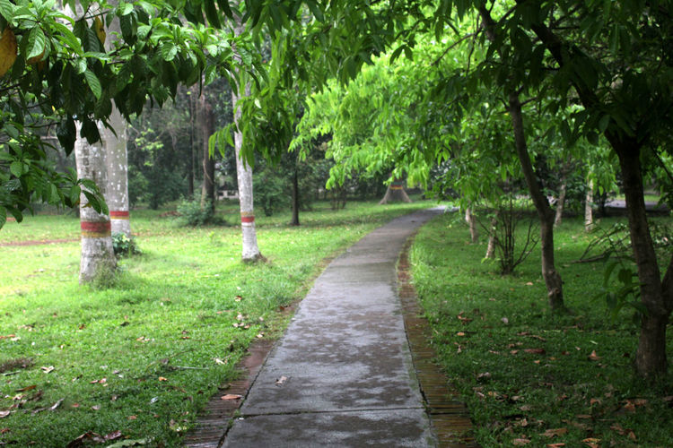 Plant Tree Footpath The Way Forward Green Color Nature Direction Day No People Park Growth Grass Tranquility Outdoors Tranquil Scene Beauty In Nature Land Garden Path Park - Man Made Space Bench Diminishing Perspective Park Bench