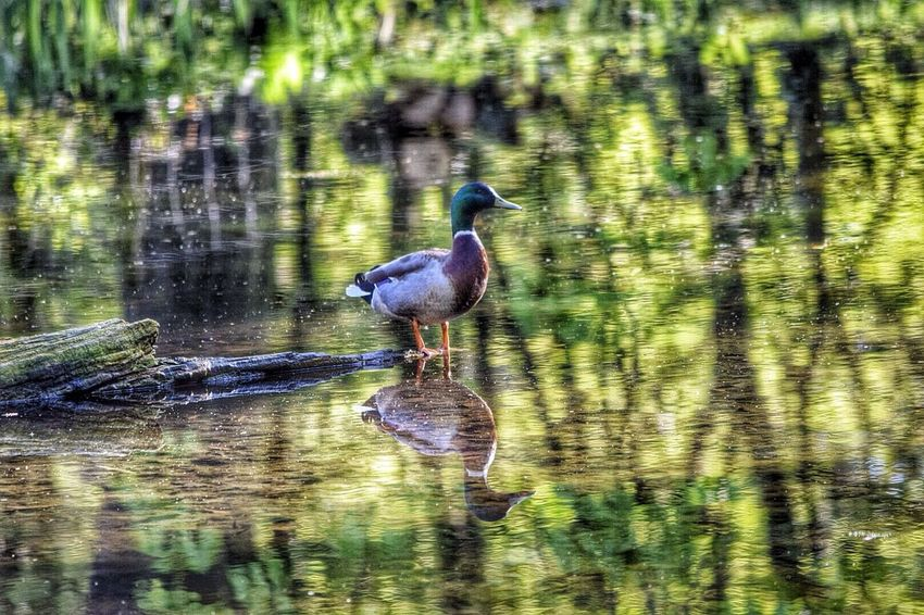 Hdr_Collection Nature_collection EyeEm Best Shots Water Reflections