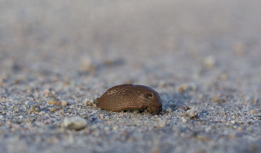 Close-up of slug on sand at beach