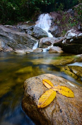 Natural waterfall at Gunung Stong state park, Kelantan malaysia. Wallpaper Background Malaysia Color ASIA Water Flowing Water Waterfall Long Exposure Power In Nature Falling Water Flowing Stream - Flowing Water