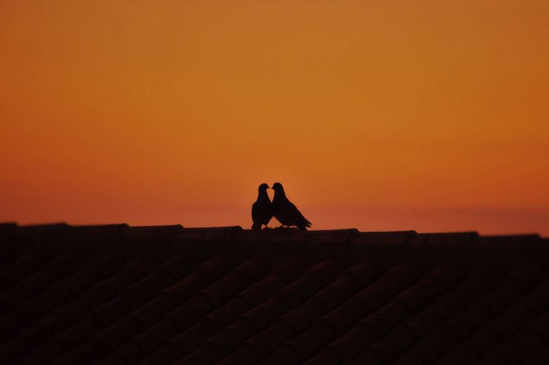 Silhouette pigeons perching on roof against sky during sunset
