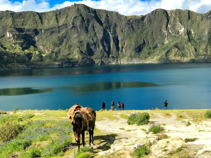 One Animal Incidental People Crater Lake Mule Donkey Mountain Water Mammal Animal Themes Beauty In Nature Animal Plant Nature Scenics - Nature Lake Domestic Animals Day Mountain Range Non-urban Scene Vertebrate Domestic Tranquil Scene Outdoors