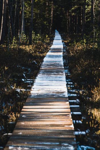Wooden boardwalk leading towards trees in forest