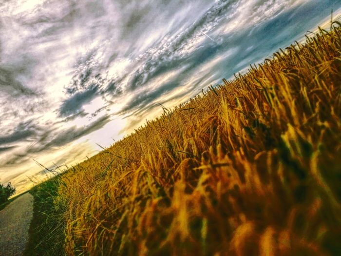 Running today! 🙏👏 Rural Scene Agriculture Farm Field Growth Cereal Plant Beauty In Nature No People Tranquility Cloud - Sky Landscape Outdoors Low Angle View Nature Popular Photos EyeEm Best Shots Exceptional Photographs Eye4photography  Happiness Feelingblessed Land Sunsetphotographs Tranquil Scene Sky Day