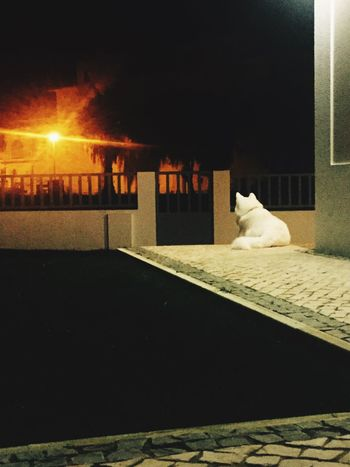 Pets Guardian Akita