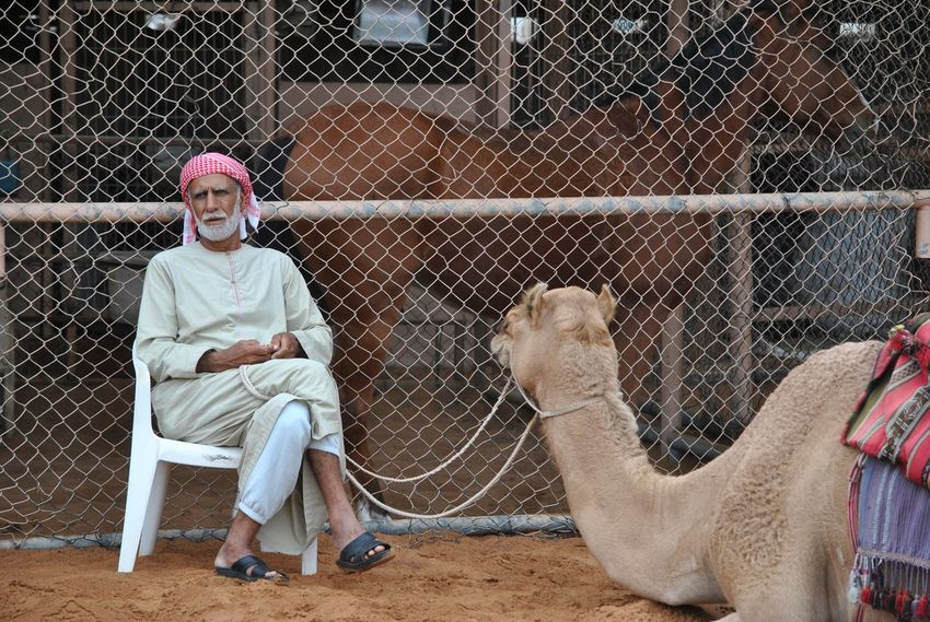 Adult Adults Only Arabs Bedouin Bedouin Tribes Bedouin Village Camel Day Desert Domestic Animals Dromedary Emirates Friendship Human Body Part Livestock Looking At Camera Men One Animal One Man Only One Person Only Men Outdoors People Portrait Sitting First Eyeem Photo EyeEmNewHere