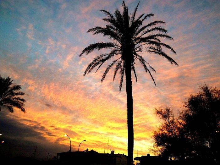 Se escuchaba una canción preciosa de Francis Cabrel en el aire, en este atardecer..... je l' aime a mourir. ..Atardecer en Empuriabrava, Costa Brava. JuanRosillo eye4photography Art is Everyw JuanRosillo Eye4photography  EyeEm Gallery Tree Bird Palm Tree Sunset Silhouette Tree Trunk Sky Cloud - Sky #urbanana: The Urban Playground Be Brave EyeEmNewHere