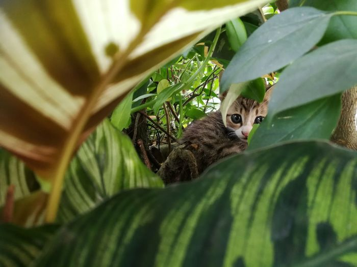 Fear Kitten Cat Green Animal Nature Kitten Stray Leaf Close-up Plant Green Color Greenery Countryside