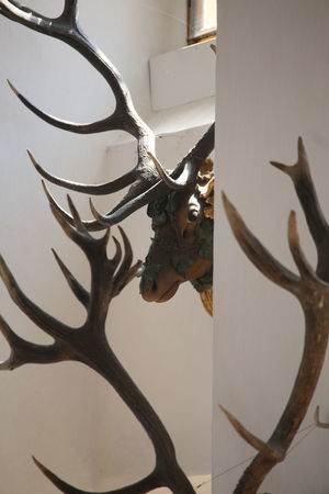 Animal Body Part Animal Skull Close-up Day Decoration Deer Hunting Trophies Indoors  No People On The Walls Show Off Tradition Trophies