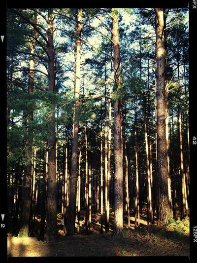 Pre crop :-) Trees